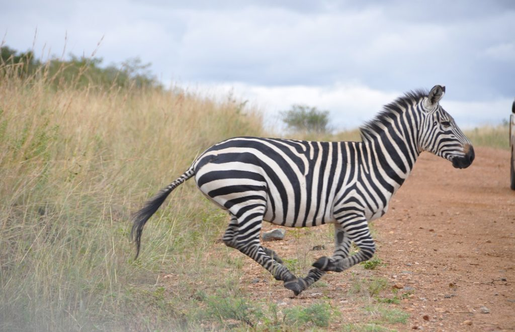 Reiseblogg, Kenya