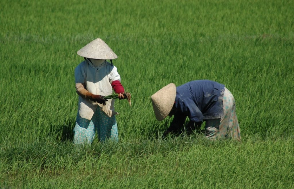Reiseblogg, Vietnam