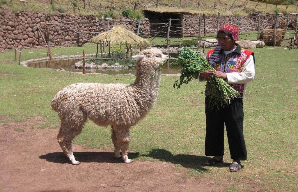 Reiseblogg, Peru