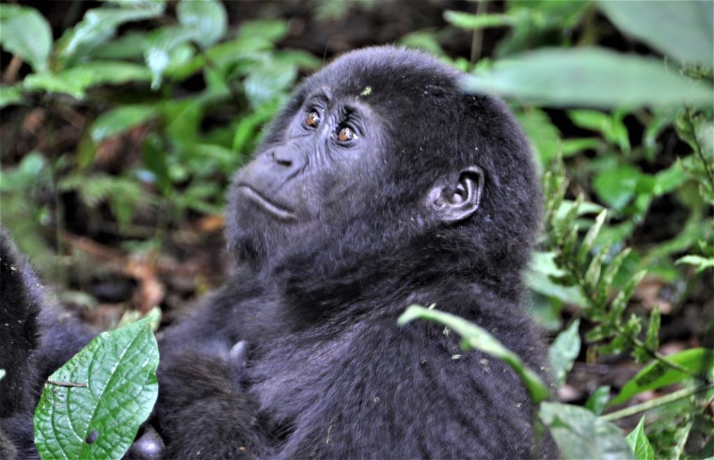 Reiseblogg, Uganda