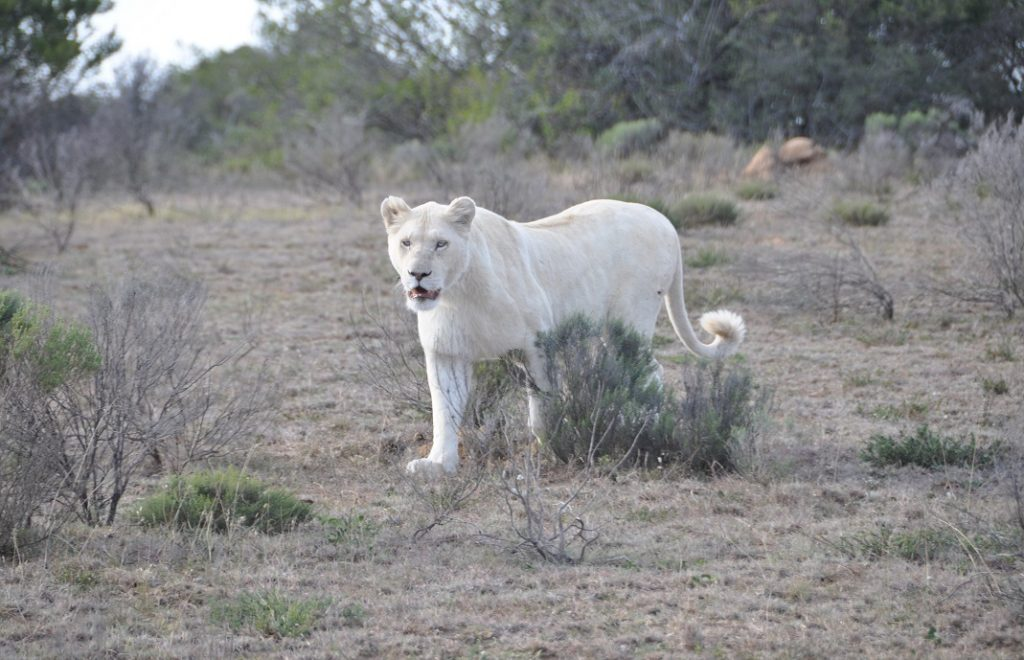 Reiseblogg, Sør-Afrika