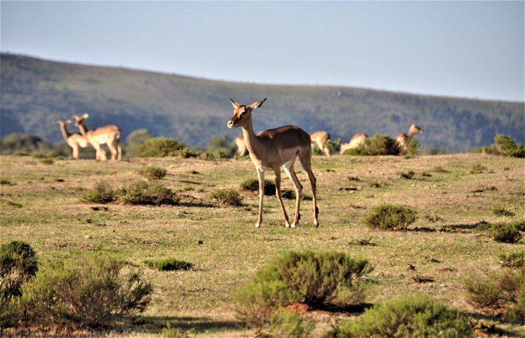 Reiseblogg, Sør-Afrika, Unike Reiser