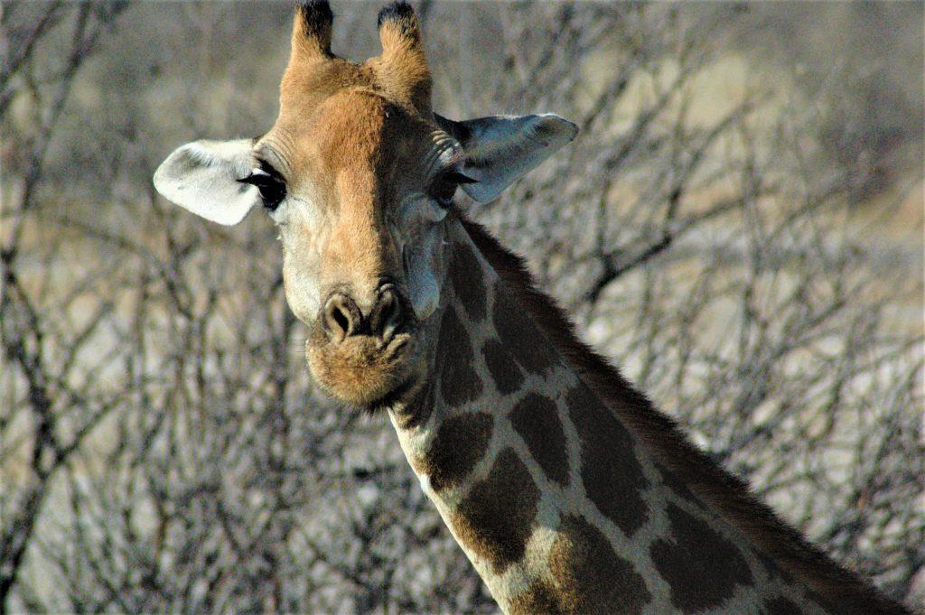Reiseblogg, Kenya, Unike Reiser