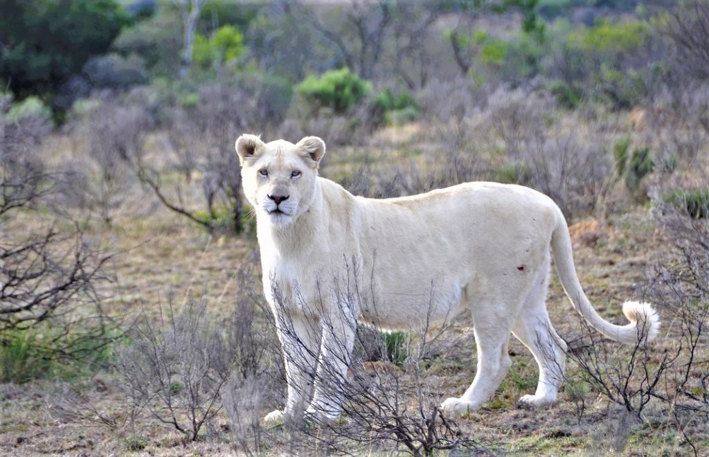 Reiseblogg, Sør-Afrika, safari, Unike Reiser