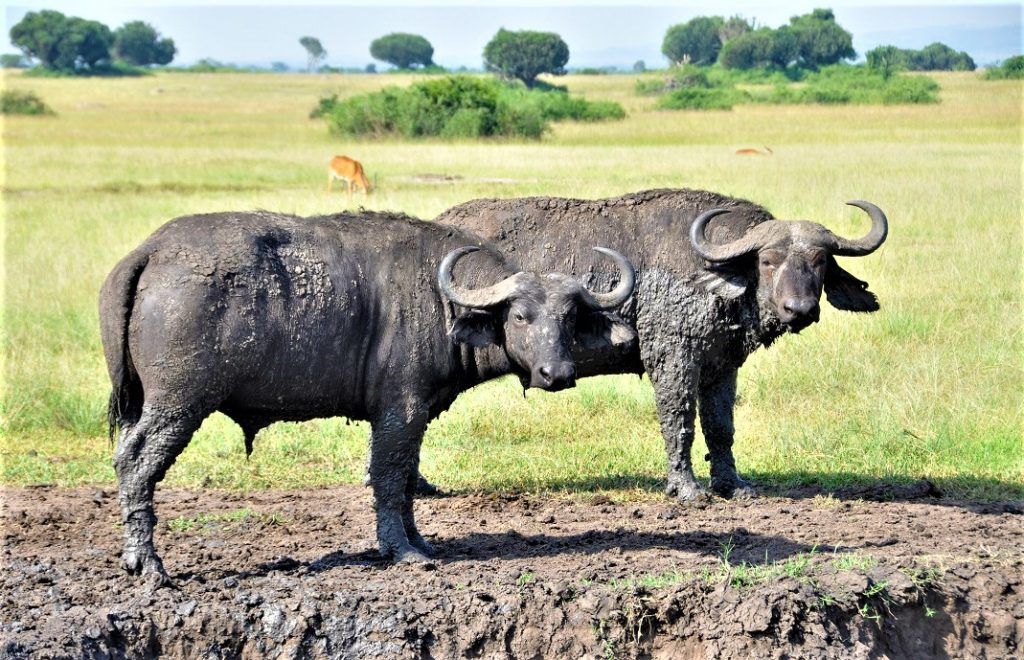 Reiseblogg, Uganda, safari, Unike Reiser