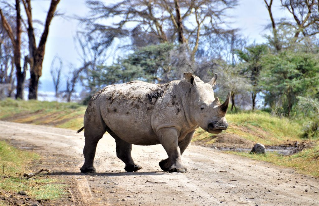 Reiseblogg, Kenya, safari, Unike Reiser
