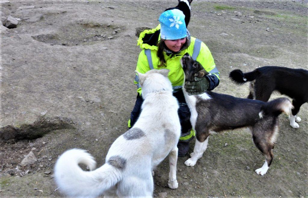 Reiseblogg, Svalbard, Norge, hundejøring, Unike Reiser